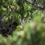 El gato sigue en el árbol